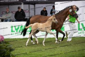 127 Diamond Touch NRW x Orchard Boginov BU7I3145