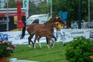 069 Like Angel x Don Diarado  A1P7063