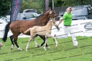 127 Diamond Touch NRW x Orchard Boginov DSC03979