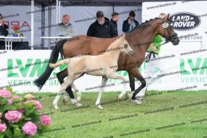 127 Diamond Touch NRW x Orchard Boginov DSC03983